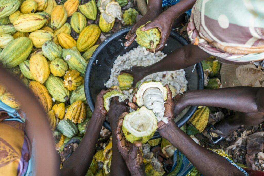 BC1-1024x683 Le cacao bio équitable