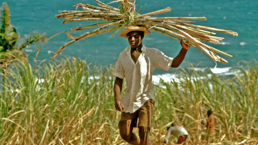 guadeloupe-canne-sucre-1024x576 Le Rhum de Guadeloupe - Marie-Galante
