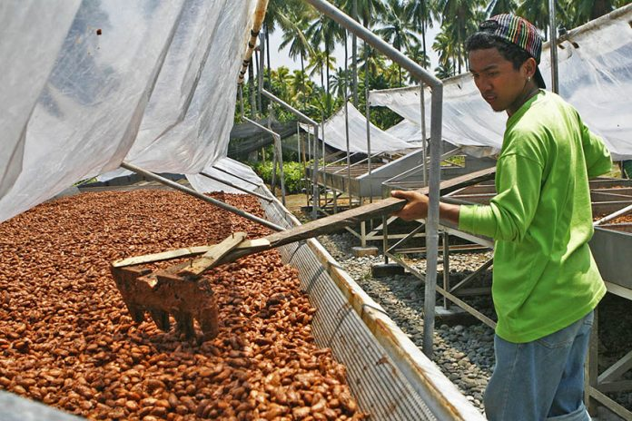 03cacao3-696x464-1 Organic fair trade cocoa