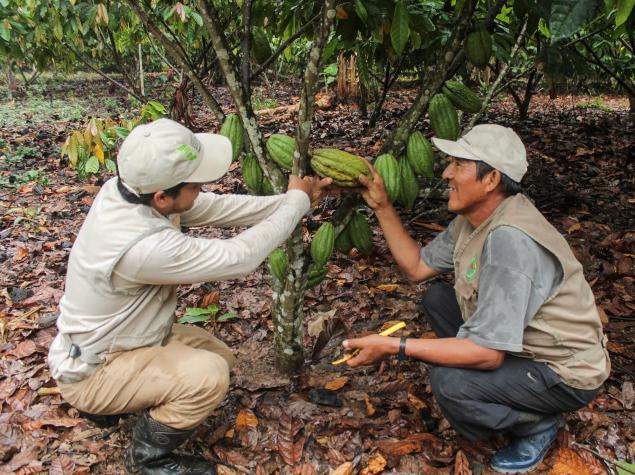 IMG_5667 Organic fair trade cocoa