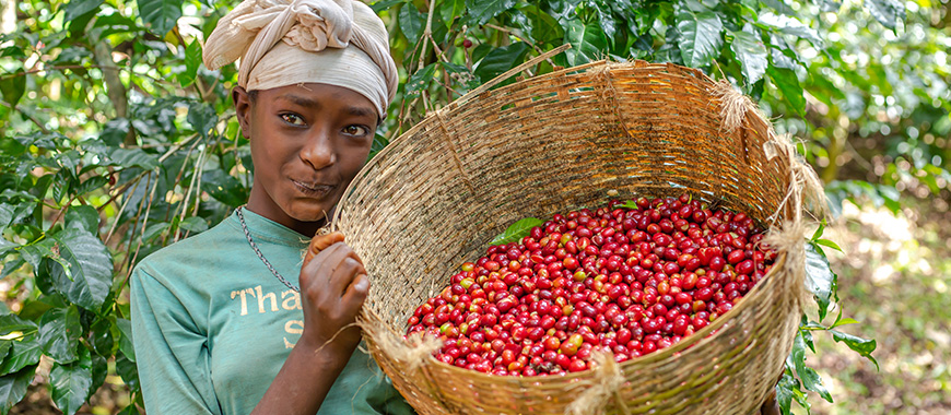 cafe-ethiopie-2 THE ETHIOPIAN MOKA COFFEE