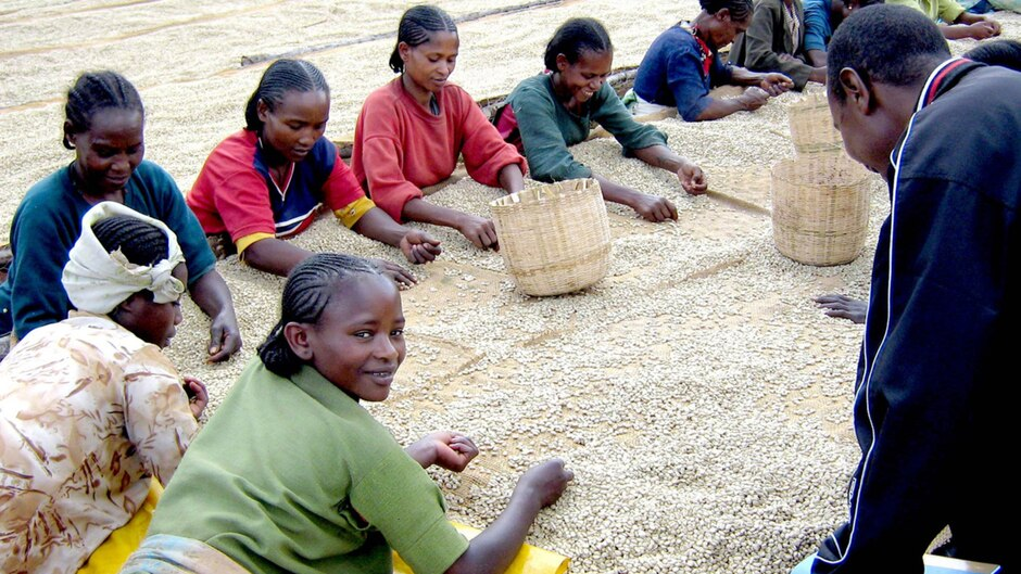 cafe-ethiopie Le café Moka d'Ethiopie