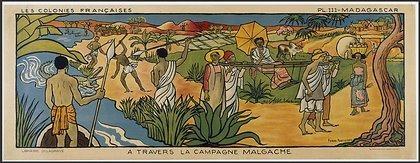 campagnemalgache-large-effect-autolevels-21-1 The Bourbon vanilla of Madagascar