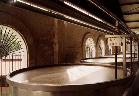 fermentation Notre Rhum d'exception