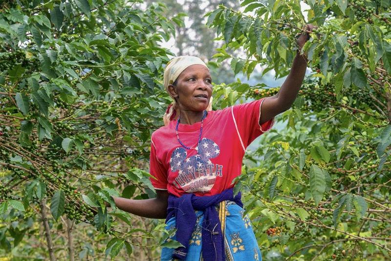 maria_bedabazingwa_coffee_farmer The Ethiopian Moka coffee
