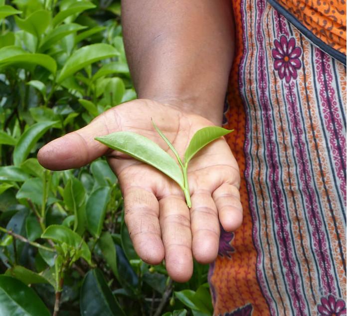 the-noir-cacao-tchai-srilanka-equitable-bio-2-1 The fair trade cocoa